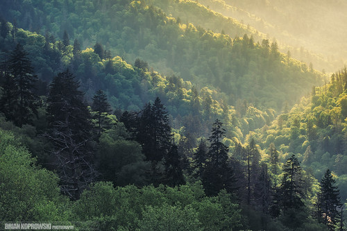 Layers in the Smokies