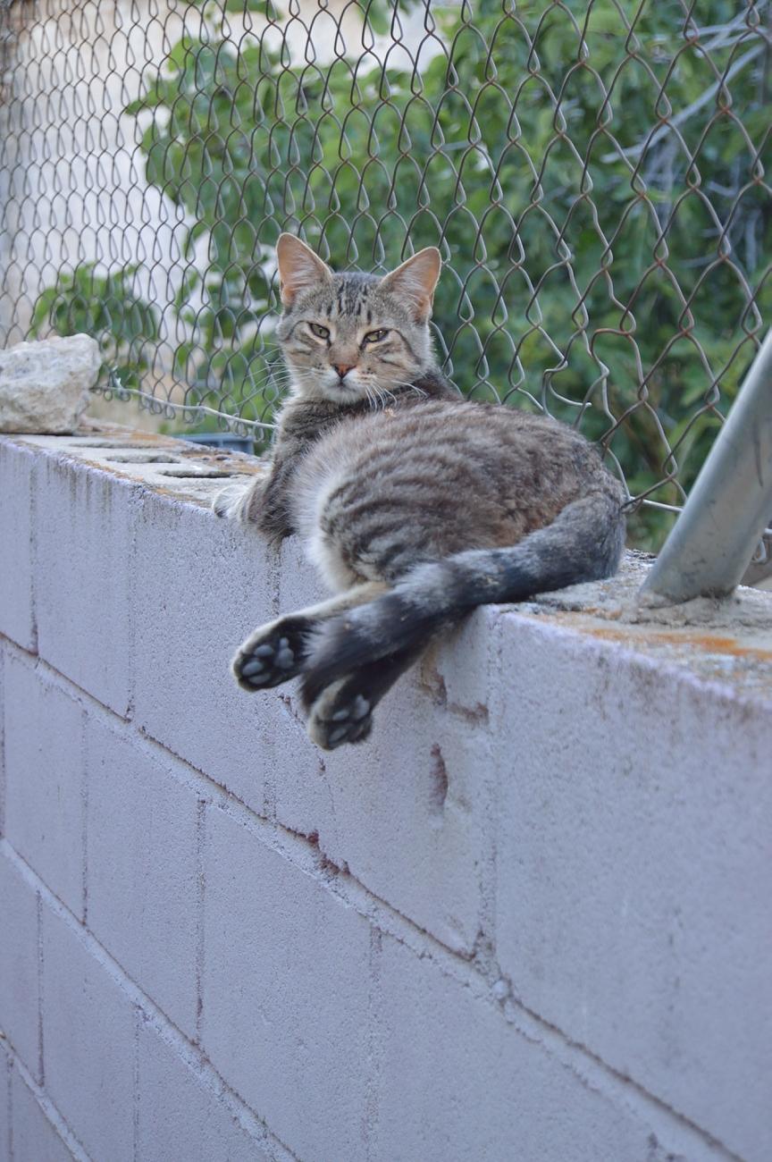 lara-vazquez-madlula-kitty