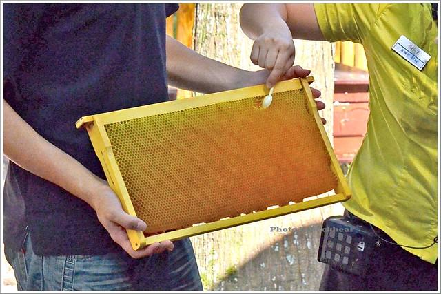 養蜂人家蜂采館009-DSC_6041