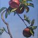 Apples-3 by Bohdan Tymo