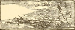 """Image from page 163 of """"A family flight around home"""" (1884)"""
