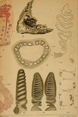 """Image from page 786 of """"Zeitschrift für wissenschaftliche Zoologie"""" (1912)"""