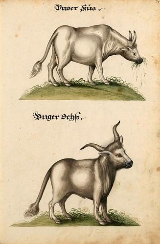 013-Aquarelle von Säugetieren…- e-manuscripta-Bibliothèque électronique suisse