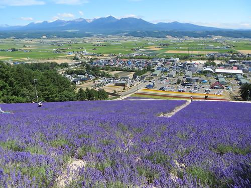 flowers summer mountains landscape hokkaido lavender valley furano skislope nakafurano lavenderpark