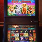 Uusi 50-linjainen videokiekkopeli Cat Paws pelattavissa Fennia Salongissa #kasinopelit #casinohelsinki