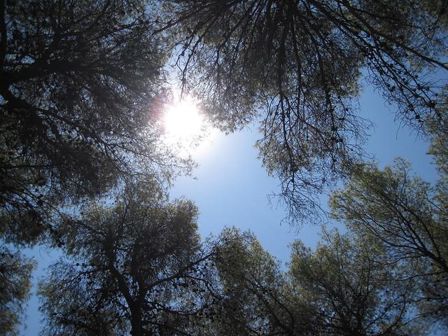 The sun, the trees...