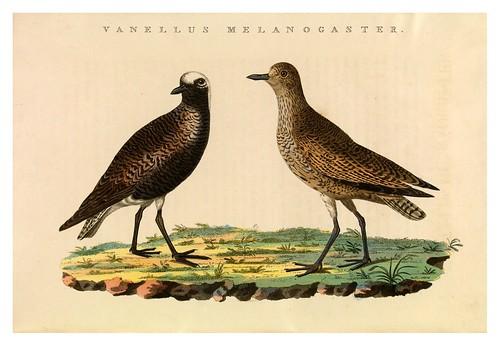 006-Avefria gris- Nederlandsche vogelen- Nationale bibliotheek van Nederland