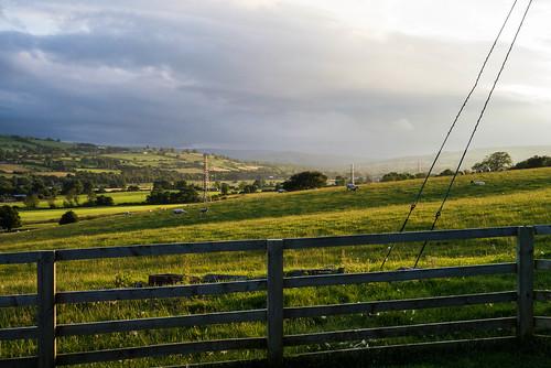 uk england field countryside sheep unitedkingdom farm countydurham wolsingham weardale