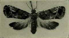 """Image from page 452 of """"Manual of fruit insects"""" (1915)"""
