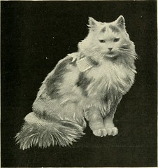 """Image from page 82 of """"The Angora cat; how to breed train and keep it;"""" (1898)"""