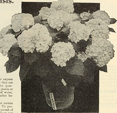 """Image from page 164 of """"Dreer's garden book 1915"""" (1915)"""