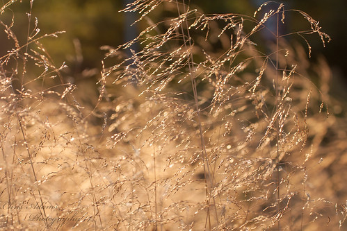 light sunset sunlight blur nature gold golden warm bokeh warmth august softfocus dreamy goldenhour warmlight softlight canoneos500d