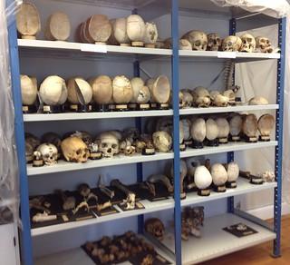 Afrensede knogler på konserveringsværkstedet.