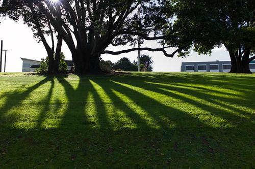 park shadow newzealand sun green grass auckland alive