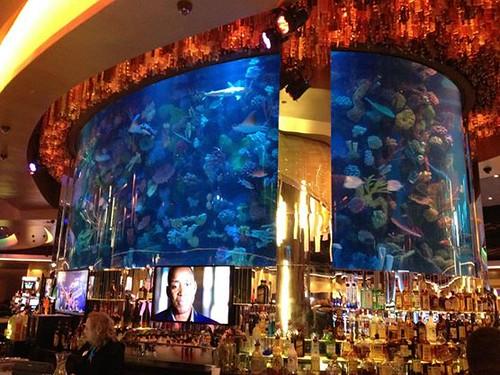 Commercial aquatic exhibits call us for Fish tank las vegas