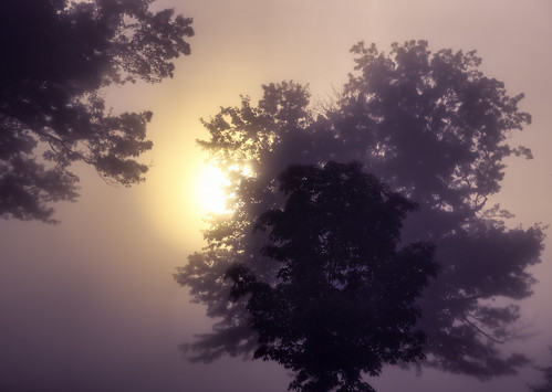 morning trees sun silhouette fog sunrise landscape morninglight maryland shallowdepthoffield baltimorecounty topazrestyle zunikoff