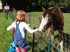 Feeding Anna the Clydesdale