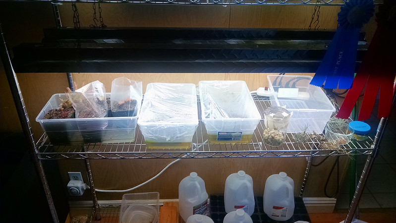 Propagation area, pre-organization.
