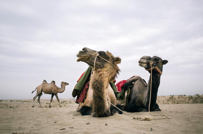 Silk Road: Taklamakan Desert