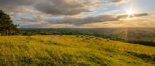 summer sun wales landscape sheep unitedkingdom hills montgomery