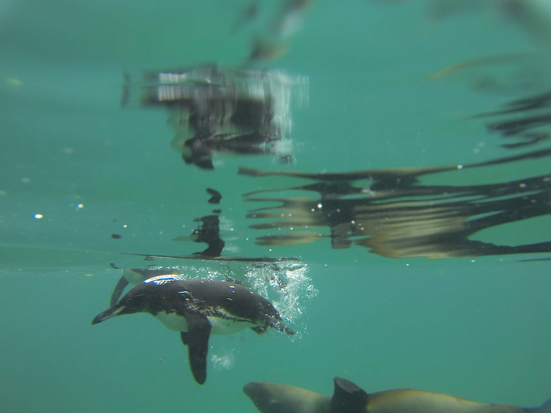 penguins and sea lions in Galapagos Islands
