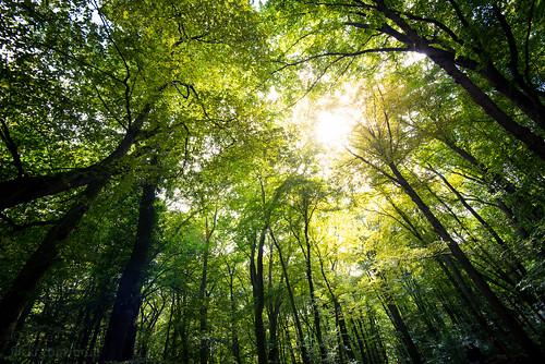wood light sun color green forest deutschland licht nationalpark natur greenwood grün wald bäume baum summerday hainich