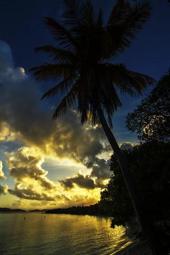 reflection tree clouds island bay nikon beachlife pelican palm tokina stthomas sunsetssunrise d7100 1116mmf28 cloudsstormssunsetssunrises ilandman4evr