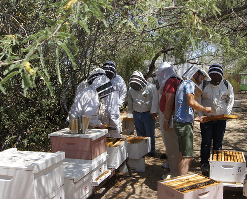 "Native American high school students get ""up close and personal"" with honey bees at the USDA Carl Hayden Bee Research Center in Tucson, Arizona, as part of their participation in the Native American Summer Institute, a long-running collaboration between the University of Arizona and the bee lab.  The curriculum helps the students learn math and science as they use two of the lab's computer models to learn about honey bee colony health and develop plans to start a beekeeping business."