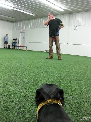 PVybe Canine DriveTrain
