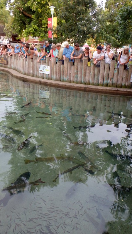 a crowd of people looking at the DNR fish pond