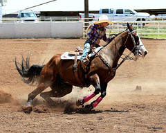 animal sports, rodeo, equestrianism, western riding, mare, equestrian sport, sports, charreada, reining, horse harness, barrel racing,