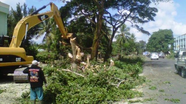 Pohon Ditebang, Hilang Rindang