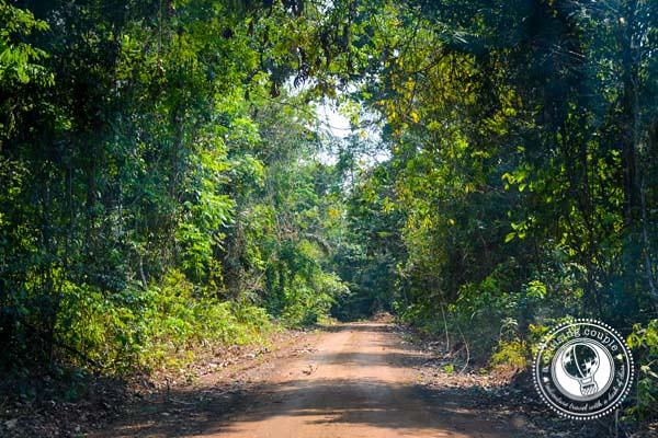 Road to Cristalino Lodge