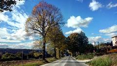 #landscape #october #cloudy #sky #trees #instamoment #subhanAllah #ig_street #ig_sharepoint