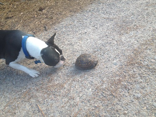 Charlie's first turtle sighting June 2014
