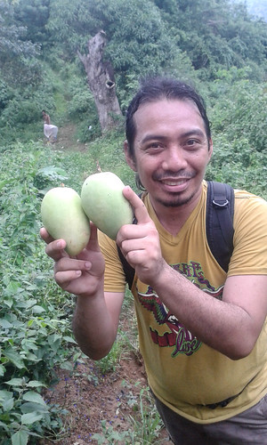 Freshly picked mangoes!