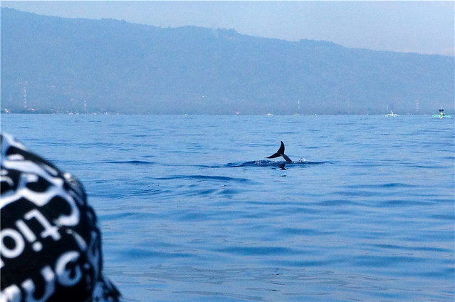 Dolphin Watching Tour at Lovina Beach