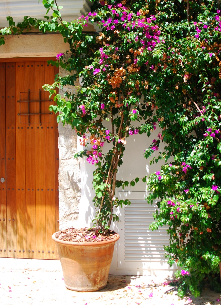 Ibizan townhouse with bougainvillea