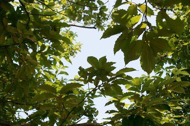 コナラの木陰が気持ちいい