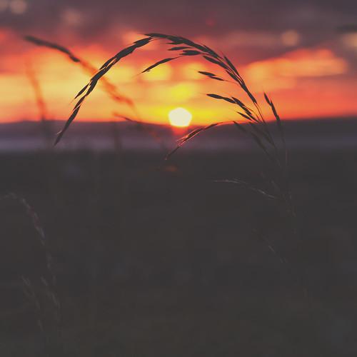 sunset summer sky colour grass silhouette canon 50mm scotland edinburgh bokeh 7d matte
