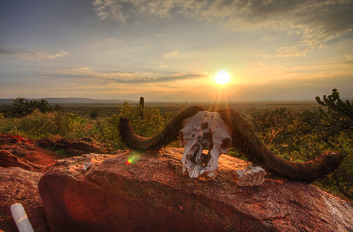 life sunset nature beautiful canon tanzania death colorful peace village time kenya african traditional peaceful safari exotic savannah masai waterbuffalo capebuffalo masaimara 2014 buffaloskull