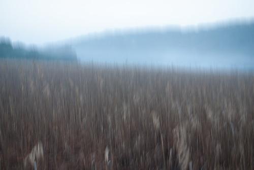 landscape teal icm wetland