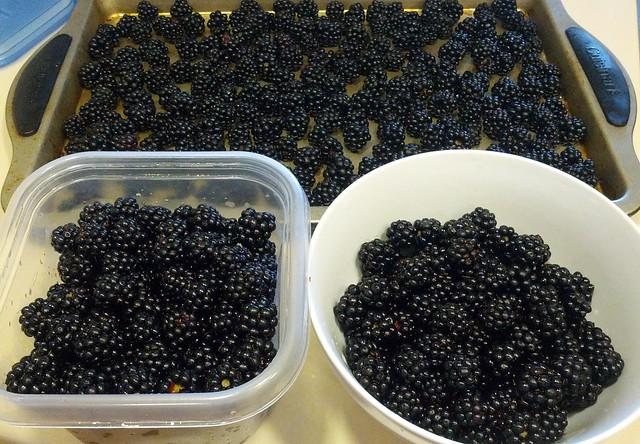 Blackberry Haul
