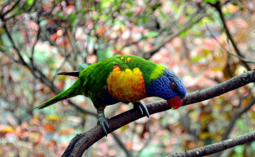 Parrot Loro Parque Tenerife 8209