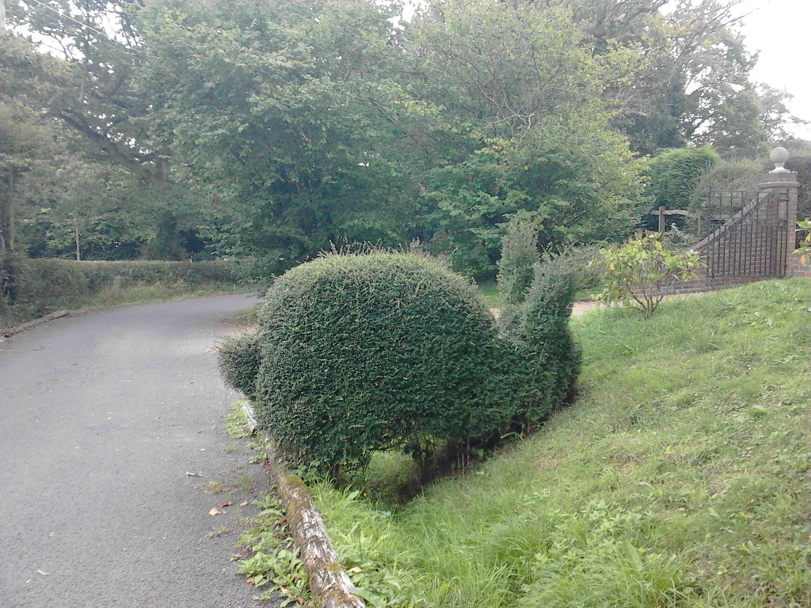 Bush Bunny Wivelsfield to Haywards Heath Topiary rabbit.
