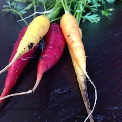 First harvest of carrots! #vegetables #urbangarden