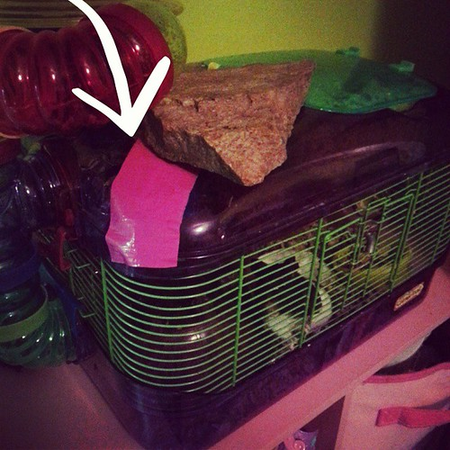 Note the duct tape and rock. This smart hamster must be suicidal, because there's no other explanation for her desire to escape into a house with six cats and a three foot snake. #hamster