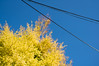 Spring growth, blue sky, and cables