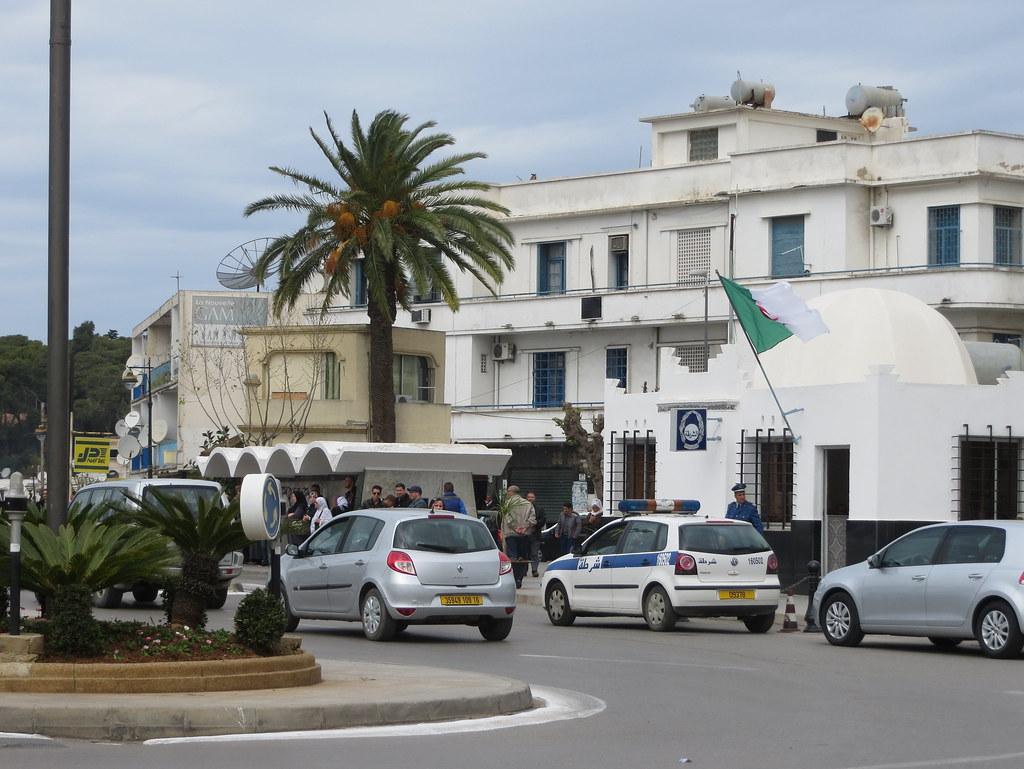 Alger 559