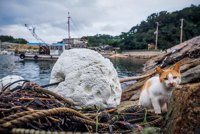 Island Cat #12